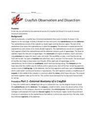 crayfish observation and dissection