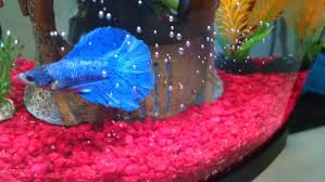 Petsmart Christmas Aquarium Decorations by Paw Province Meet Scuba