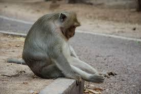 16 amazing facts sea monkeys mental floss