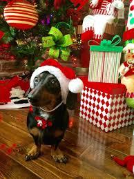 the top 15 things on your dog u0027s christmas list u2013 iheartdogs com