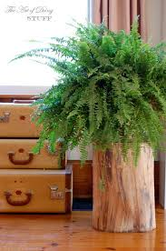 Pictures Of Tree Stump Decorating Ideas Best 25 Tree Stumps Ideas On Pinterest Tree Stump Furniture
