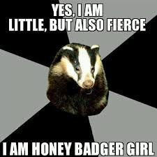 Honeybadger Meme - honey badger girls girls badger twitter
