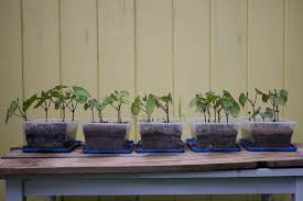 Garden Soil Types - a 13 year old u0027s science project soil types for gardening