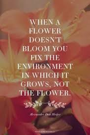 a flower you shouldn t when a flower doesn t bloom you fix the environment in which it