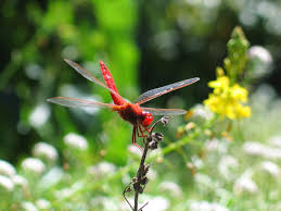 free images nature wing flower flying fly wildlife wild