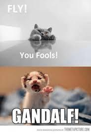 Grumpy Cat Meme Clean - 25 best memes about grumpy cat grumpy cat memes