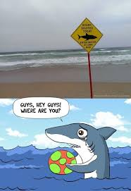 Funny Shark Meme - shark viral viral videos