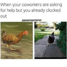 Chicken Running Meme - maury camera running after chicken funniness pinterest