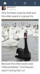 Black Swan Meme - meme dump on a lazy sunday dank nfresh album on imgur