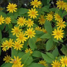 ornamental plants buy live plants india