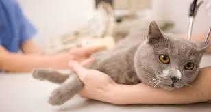 pet euthanasia pet euthanasia for dog cat toronto mississauga brtion oakville