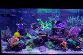 Reef Aquarium Lighting Reefkeeping Magazine March 2016 Tank Of The Month