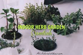 indoor herb garden the essentials all natural ideas