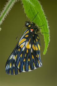 1684 best butterflies and bugs images on pinterest beautiful