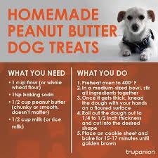 recipe for dog treats treats for dogs and cats trupanion pet insurance