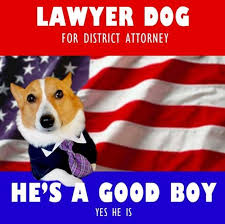 Dog Lawyer Meme - the very best of the lawyer dog meme