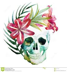 watercolor skull with flowers stock vector illustration of ornate