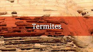 Winged Termites In Bathroom How To Get Rid Of Termites In Your Rental Property