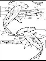 ocean animal coloring pages alric coloring pages