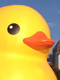 duck duck u201cduck u201d the history of the rubber ducky 90 5 wesa