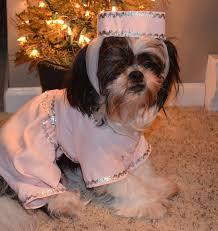 Dog Spider Halloween Costume Genie Dog Halloween Dress Medium Dog Costume 34 99