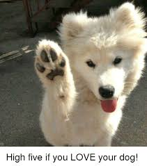 High Dog Meme - high five if you love your dog love meme on me me