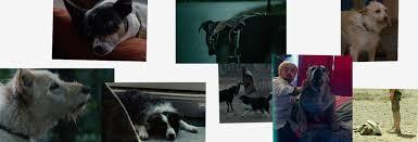 requiem for a dog a24