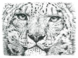 photorealistic pencil drawings of animals remrov u0027s artwork