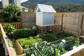 backyard chicken ideas with inside a frame chicken coop 11992