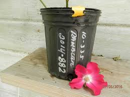 Pots For Sale Crop 244