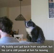 Mad Kitty Meme - funny animal overload 42 pics