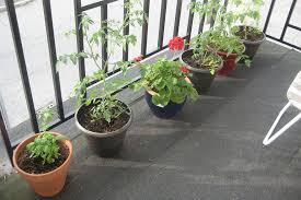 Small Balcony Garden Design Ideas Simple And Easy Small Balcony Garden Design Ideas Planted With