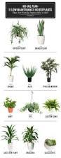 Office Plants Best 25 Office Plants Ideas On Pinterest Plants Low Light