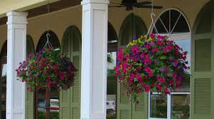 Best Plants For Hanging Baskets by The Best Plants For Hanging Baskets In Full Sun Practical Guide
