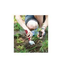 organic gardening basics organic pest and weed control