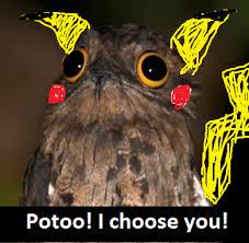 Potoo Bird Meme - pin by emielia jarvis on potoo memes pinterest potoo bird memes