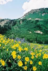 Flower Area - albion basin