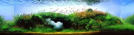 backyard aquaponics u2022 view topic decent sized fish tank