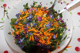 cuisiner les herbes sauvages journée cueillette et cuisine de plantes sauvages dans les vosges