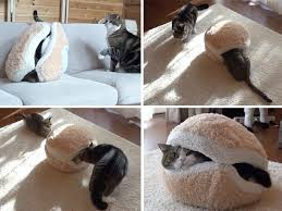 cute alert two cats battle over bed that looks like a burger