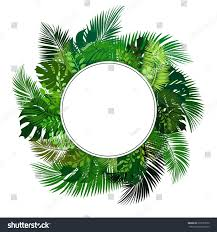 circle blank sign tropical leaves vector stock vector 615557690