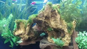 aquarium decorations can java moss be super glued to plastic aquarium decorations my