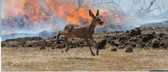 Wildfire Jordan Mt by Coping With Wildfire Smoke Montana Hunting And Fishing Information