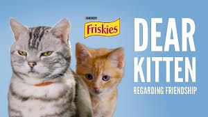 dear kitten friendship