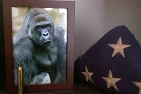 Too Damn High Meme Generator - the harambe meme is still going strong and it s about a lot more