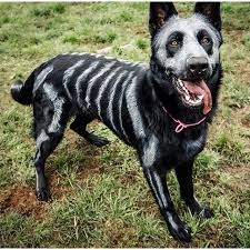 diy costumes for dogs popsugar pets