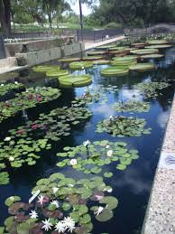 Flower Delivery San Angelo Tx - international water lily collection in san angelo tx places i