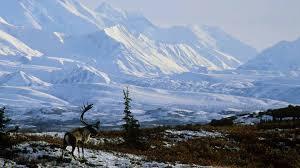 brilliant colors of denali national park alaska wallpapers top places to visit in beautiful alaska topthingz
