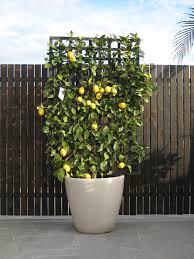 botanical events plant u0026 ornament hire catalogue garden