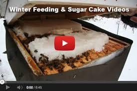 Raising Bees In Backyard by Winter Fondant Feeding Beekeeping 101 Video Diy Living